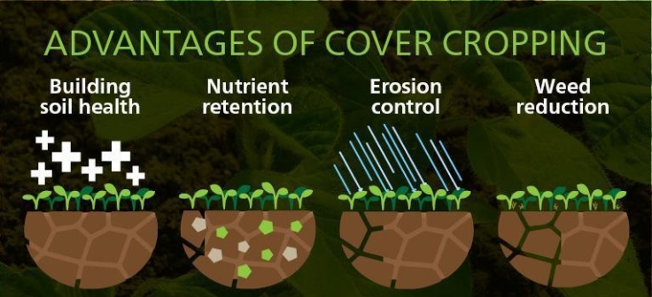 july-28-cover-crops-blog-800x500.jpg
