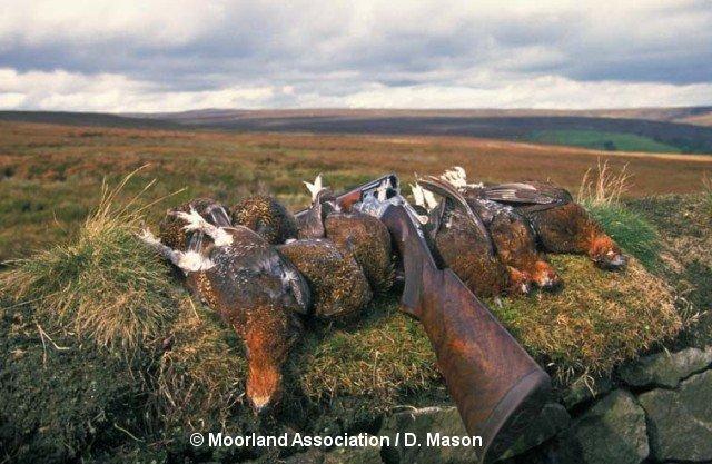 45-moorland-assoc-website